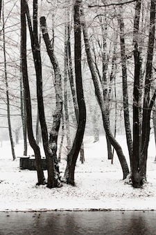 Winter bevroren bomen en rivier