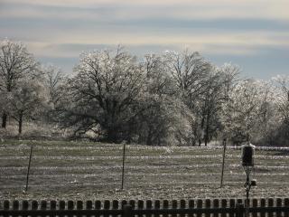 Winter, bomen, ijspegels