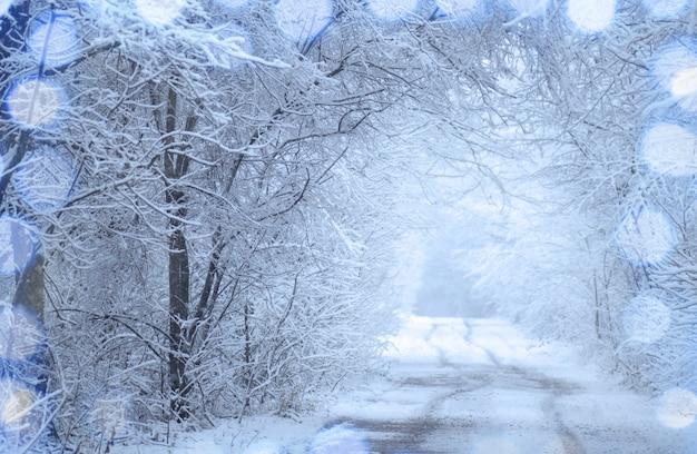 Winter bomen met vorst. winterruimte en weg
