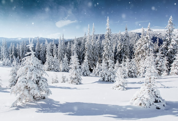 Winter boom in de sneeuw. karpaten, oekraïne, europa. bokeh lichteffect, zacht filter.