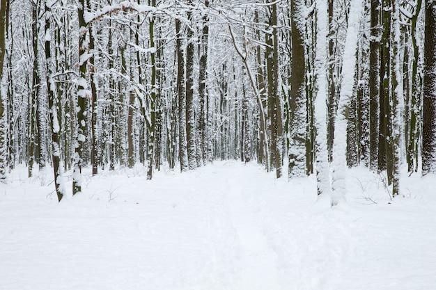 Winter bos en de weg. winterlandschap
