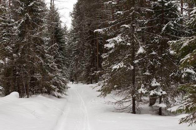 Winter bos met sneeuw