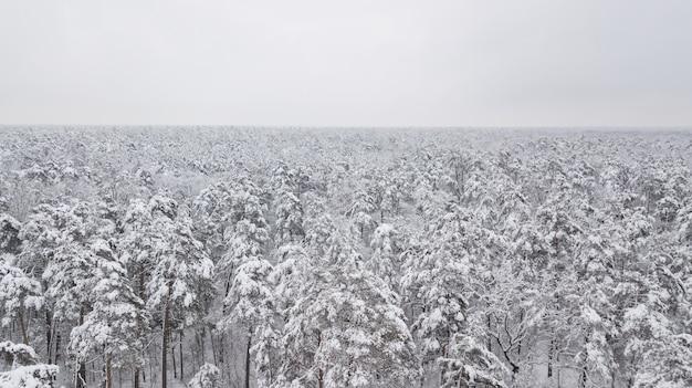 Winter bos. uitzicht van boven. de foto is gemaakt met een drone. pijnboom en sparrenbos in de sneeuw.