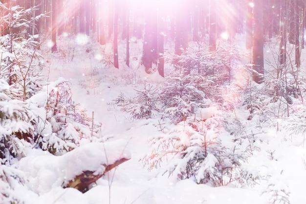 Winter boslandschap. hoge bomen onder sneeuwbedekking. januari ijzige dag in het park.