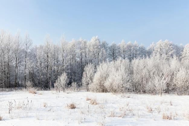 Winter boslandschap
