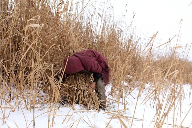 Winter. een man maait en verzamelt droog riet op een ijzig meer.
