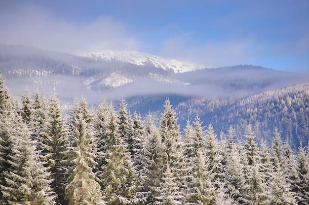 Winter forest in de bergen