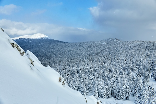 Winter frosty forest met bevroren bomen
