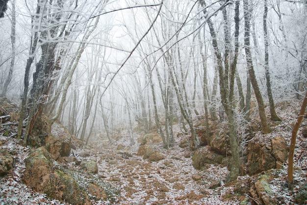 Winter ijzig bos met prachtige bomen