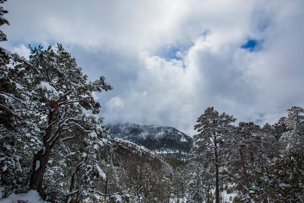 Winter in de bergen van bergueda, barcelona, pyreneeën, spanje