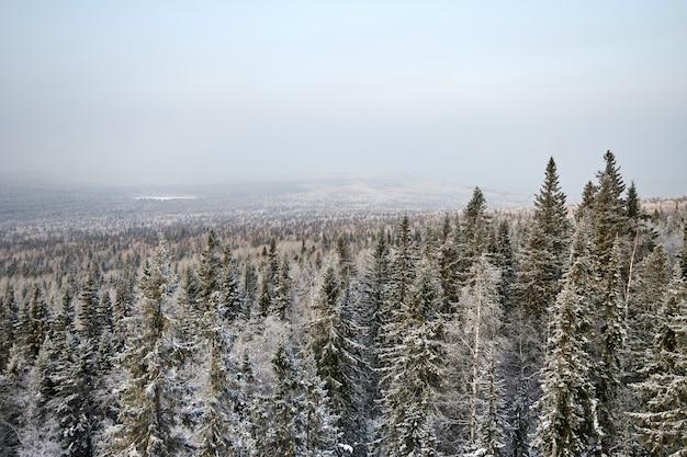 Winter in het bos en de bergen. alle bomen zijn bedekt met sneeuw. sparren in de sneeuw