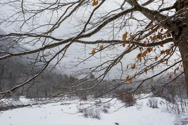 Winter in ordesa en monte perdido national park pyreneeën spanje