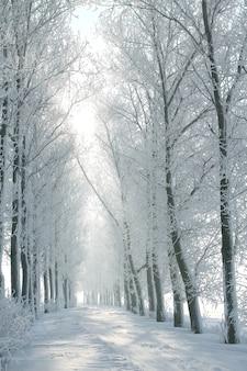Winter landelijke weg tussen de bomen bedekt met vorst
