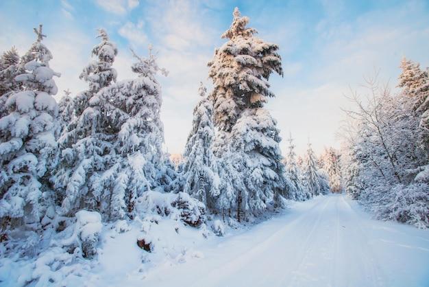 Winter landschap bomen in sneeuw