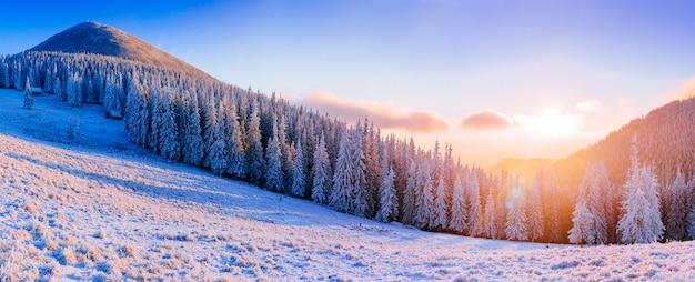Winter landschap bomen in vorst