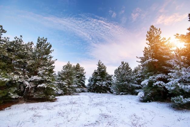 Winter landschap. samenstelling van de natuur.