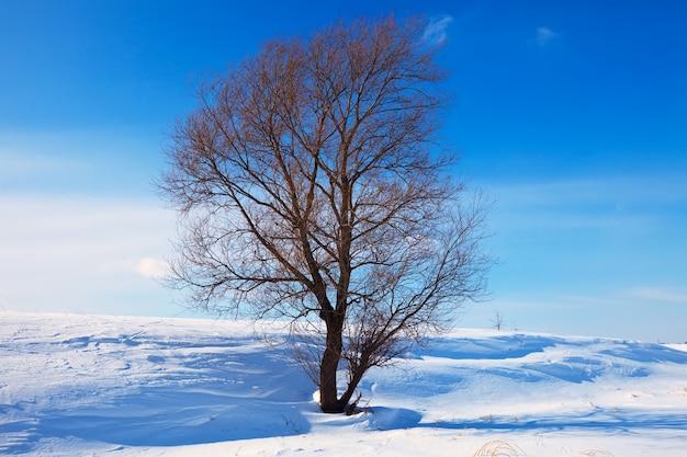 Winter lanscape met enkele boom