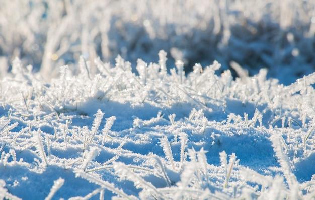 Winter magische natuur. een gedroogde kruidenplant bedekt met gouden ijzige kristallen. textuur van ijs en sneeuw. winterlandschap.