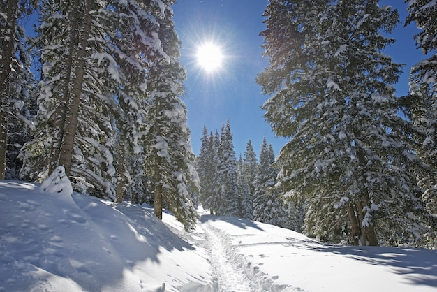 Winter mountain trail
