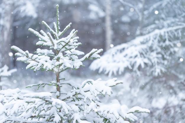 Winter natuur achtergrond van kerstboom in het bos