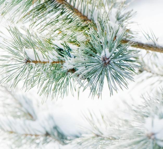 Winter natuur. bevroren bloem