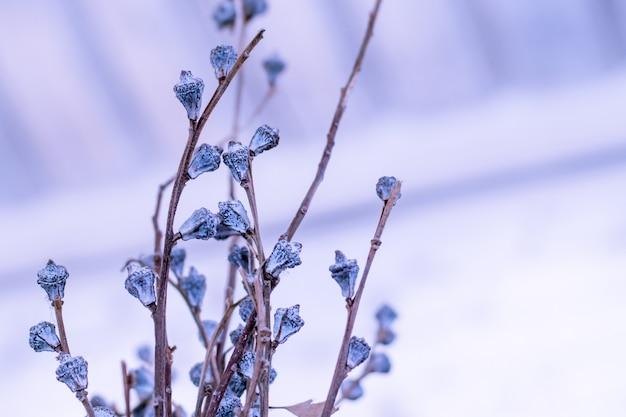 Winter of lente aard achtergrond met bevroren violette bloemen