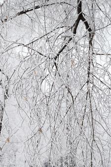 Winter patroon van takken bedekt met sneeuw