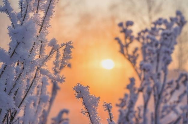 Winter prachtig landschap met de zon, vorst en mist.