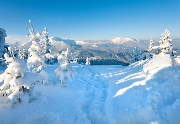 Winter rijp en besneeuwde sparren op berghelling (karpaten, oekraïne)