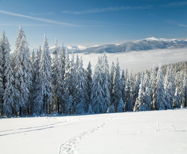 Winter rustig berglandschap met rijp en besneeuwde sparren met voetafdruk op de voorgrond (uitzicht vanaf het skigebied bukovel (oekraïne) naar de bergkam van svydovets)