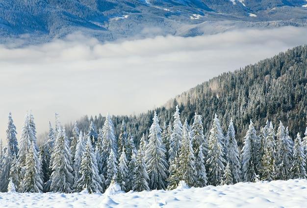 Winter rustig berglandschap met rijp en besneeuwde sparren