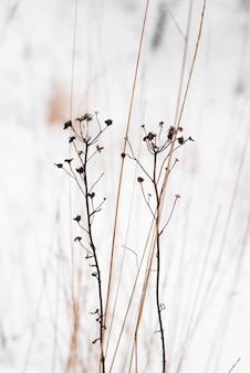Winter rustige stemming. droge wilde bloemen en sneeuw. verticaal perspectief. natuurlijke achtergrond. minimalistisch natuurconcept