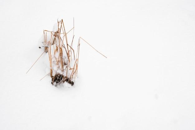 Winter rustige stemming. droog veld gras struik en sneeuw. ruimte kopiëren. natuurlijke achtergrond. minimalistisch natuurconcept