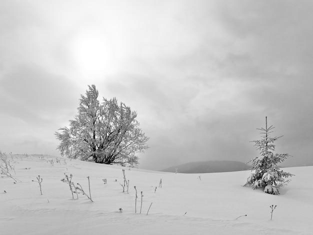 Winter saai kalm berglandschap met besneeuwde bomen op heuvel en zon door wolken Premium Foto