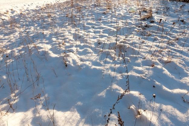 Winter seizoen. witte sneeuw drijft dicht gras af, dat opdroogt met het begin van koud weer. kleine scherptediepte.