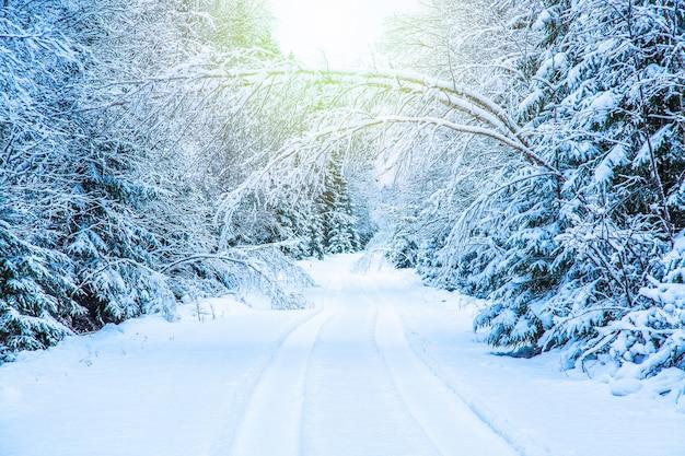 Winter seizoensgebonden landschap. weg in de winterbos met sneeuw behandelde bomen met zonlicht