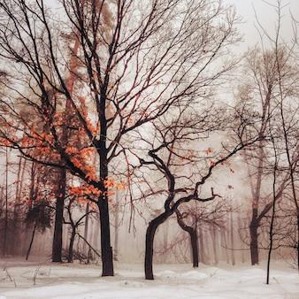 Winter sneeuw bomen