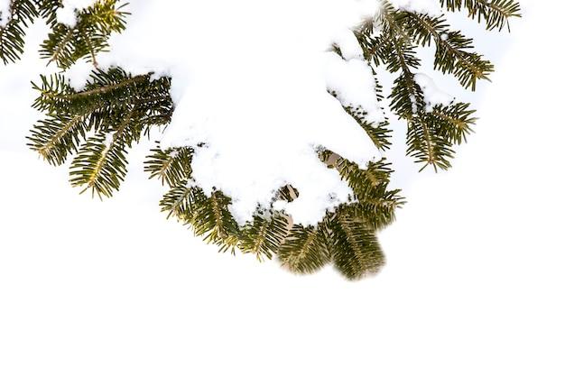 Winter sneeuw bos scène. het bos van de pijnboomboom in het seizoen van de de wintersneeuw