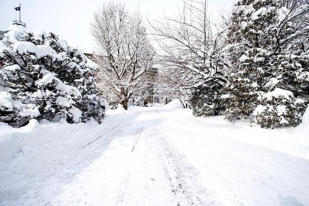 Winter sneeuw scène. het bos van de pijnboomboom in het seizoen van de de wintersneeuw