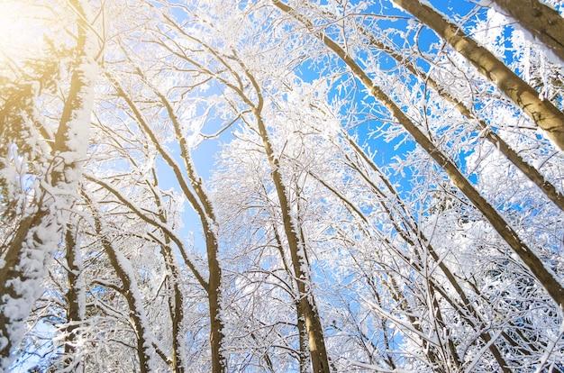Winter soorten besneeuwde boomtakken tegen een blauwe heldere ijzige lucht.