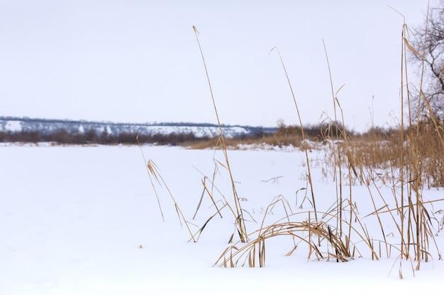 Winter, veld met droog gras bedekt met witte sneeuw