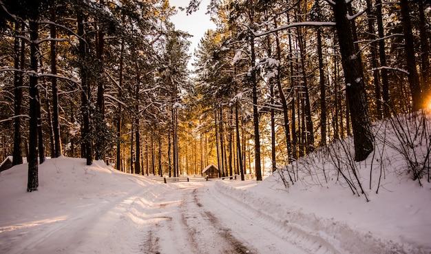Winter weg in het bos