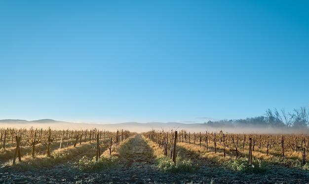 Winter zonsopgang boven wijngaarden in de noordelijke kaukasus