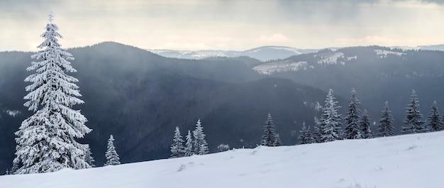 Winterberglandschap met besneeuwde pijnbomen