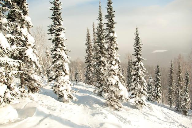 Winterbos in de bergen. skibaan in de sneeuw in het bos.