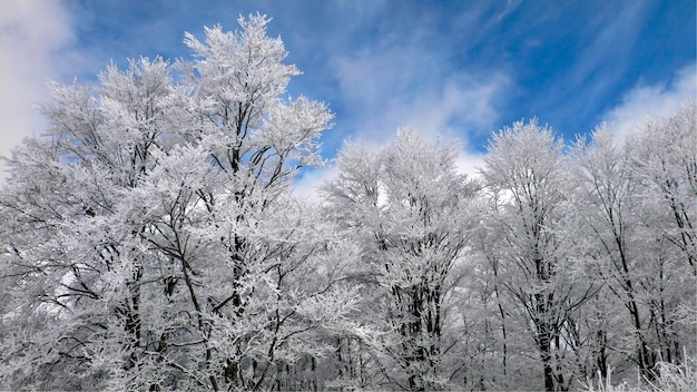Winterbos met berijpte boomtakken over blauwe hemel