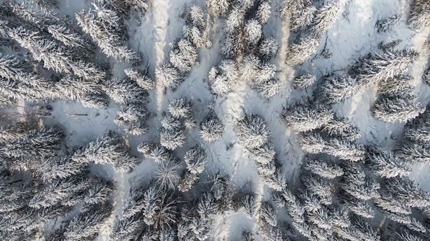 Winterbos met besneeuwde bomen, luchtfoto. winter natuur, landschap met bomen bedekt witte sneeuw.