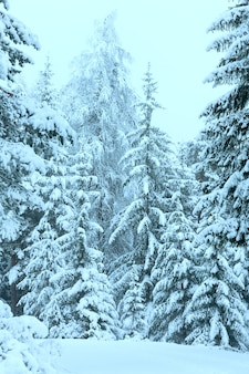 Winterbos met besneeuwde sparren (oostenrijk).