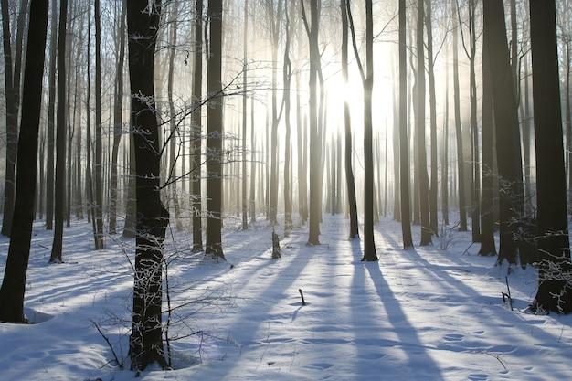 Winterbos op een mistige ochtend in december