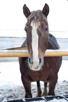 Winterdag, een paard op de boerderij tijdens een sneeuwval